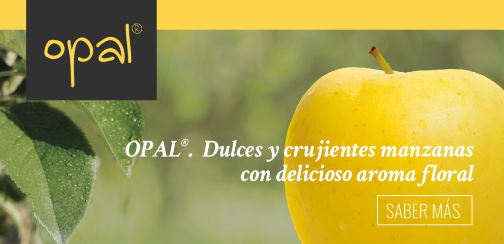Opal manzana. Banner home | Orchard Fruit